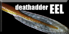 Deathadder EEL Big Series