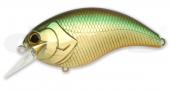 06-Golden Shiner