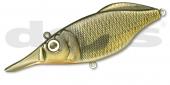 16-Gold Carp
