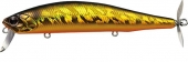 211-Golden Shiner