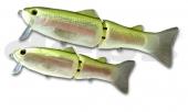 28-Rainbow Trout