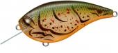 363-Albino Craw