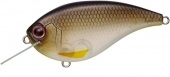 365-Gizzard Shad