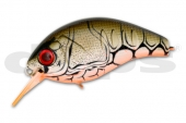 44-Orange Belly Craw