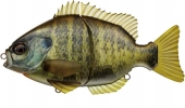632-Natural Bream