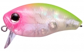 ABL74-Abalone Pink Clown