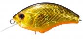 H04-Black Gold Orange Belly