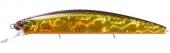 H04-Gold Black Orange Belly1