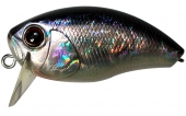 H09-Crystal Blue Shiner