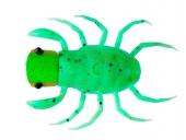 OM021-Grasshopper