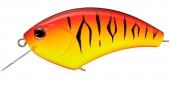 PT50-Hot Chili Tiger
